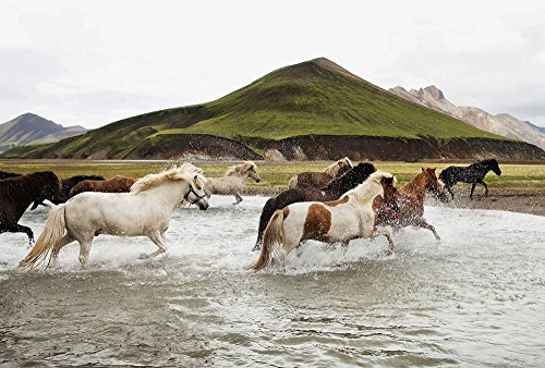 FHYGJD Freedom Horses Running In Water Art Print Canvas Poster,Home Wall Decor(28x42 inch) by FHYGJD