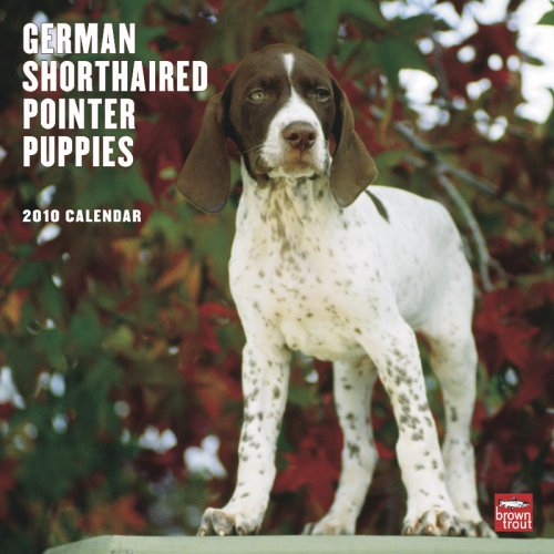 Pointer 2010 Calendar (German Shorthaired Pointer Puppies 2010 Square Wall)