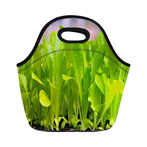 Lettuce Greenhouse - Semtomn Lunch Bags Growing Farming Green Lettuce Seedling Food and Vegetable Greenhouse Neoprene Lunch Bag Lunchbox Tote Bag Portable Picnic Bag Cooler Bag