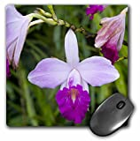 "3dRose Martinique, West Indies. Bamboo Orchid, Balata Garden Mouse Pad, 8"" x 8"" (mp_74045_1)"