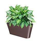 Ergo Self Watering Planter Pot - Indoors, Outdoors Planters Box, Modern Coffee Rectangular Plant Container for Windowsill - Grow Flowers, Herbs Easily, by SavvyGrow (Coffee)