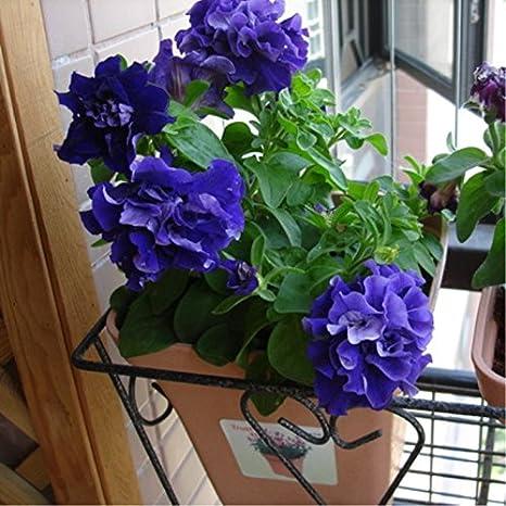 100 PC / semillas de la petunia bolsa de semillas de flores ...