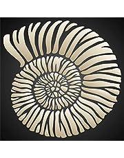 استنسل صدفة فوسيل من فوسيل مقاس 16.5 × 16.5 سم (M) - قالب استنسل للأمونيت الأحفوري للرسم