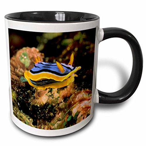 3dRose 84127_4 Close up of Nudibranch, Marine Life-NA02 MWT0008-Michele Westmorland Ceramic Mug, 11 oz, Black/White
