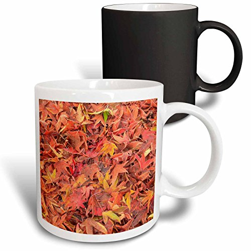 Danita Delimont - Autumn - Autumn color, maple leaves, Mill Creek, Washington State, USA - 11oz Magic Transforming Mug (mug_231821_3)
