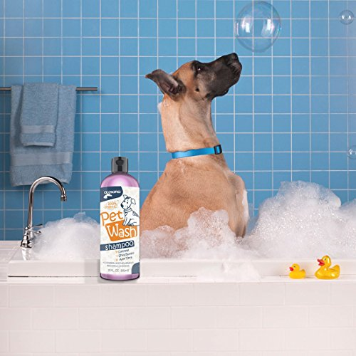 organic-oatmeal-dog-pet-shampoo-conditioner-medicated-made-with-aloe-vera-20-oz-100-natural