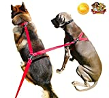 Double Dog Leash - Double Dog Leash Coupler 8ft. Lead, Adjustable Clip, Any Size, Protect Your Dogs Everywhere
