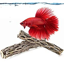 "2 Betta Wood Logs, Nutritious Treat for Freshwater Fish, Mimics Native Blackwater Environment, Provide Hiding Space for Fry, Pair of 6"" Cholla Wood, Attractive, Functional Aquarium Decor"