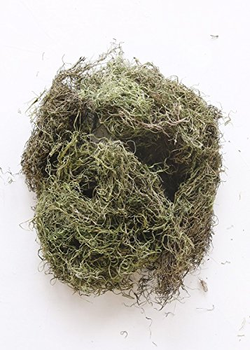 Floral Home Natural Spanish Moss in Dyed Basil Green - .25 lb Bag - Set of 3