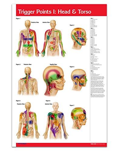 reflexology chart laminated - 7