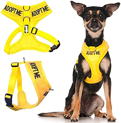 Amazon Com Dexil Limited Adopt Me Yellow Color Coded Non Pull Front And Back D Ring Padded And Waterproof Vest Dog Harness Donate To Your Local Charity Xs Pet Supplies