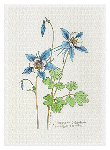 ARThouse Botanical Illustration of Columbine from the Wildflowers Group, Giclee Print, 7 X 9.5 Inches - Columbine Mixed Colors