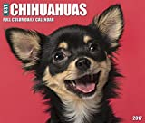Just Chihuahuas 2017 Box Calendar (Dog Breed Calendars)
