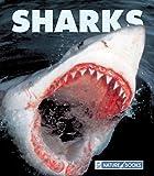 Sharks, Gary Lopez, 1592966497