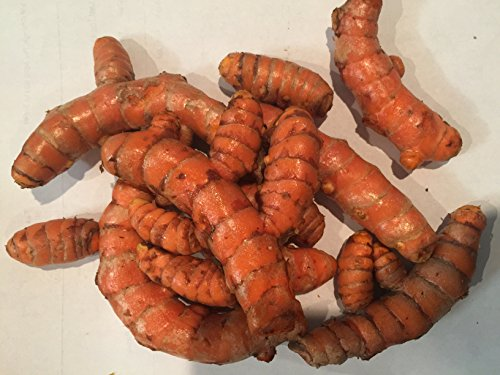 Spicy World Turmeric Whole Raw Root, 1 Pound