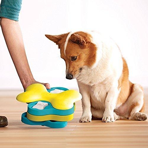 Jouet puzzle pour chien