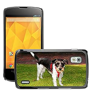 Hot Style Cell Phone PC Hard Case Cover // M00110983 Dog Female Small Sweet Curious // LG Nexus 4 E960