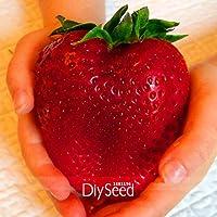 Venta! Rarest Semillas de la herencia Súper Gigante Japón rojo de la fresa orgánicos, 100 PC / porción, dulce de fruta…