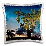 Danita Delimont - Succulents - Opuntia moniliformis, Succulent dry forest, Puerto Rico-CA27 MPR0054 - Maresa Pryor - 16x16 inch Pillow Case (pc_75321_1)