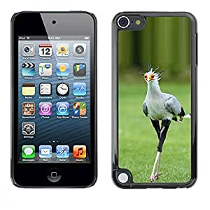 PC/Aluminum Funda Carcasa protectora para Apple iPod Touch 5 bird green spring roadrunner nature / JUSTGO PHONE PROTECTOR