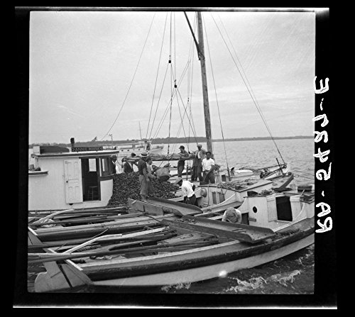 The buy boat of the oyster fleet. Rock Point, Maryland by Historic Photos (Image #1)