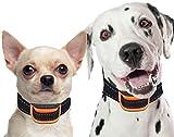 Bark Collar [New Version] Humanely Stops Barking