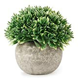 Kumii Artificial Plastic Potted Plant Small Topiary Plants in Pot, Desk Office Living Room Decoration (Green Leaf)