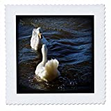 3dRose WhiteOaks Photography and Artwork - Ducks - Mirror Mirror is a photo of two ducks looking at each other - 12x12 inch quilt square (qs_265328_4)