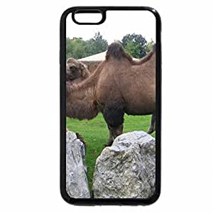iPhone 6S Plus Case, iPhone 6 Plus Case, Camels At Chester Zoo