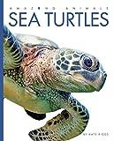 Amazing Animals: Sea Turtles