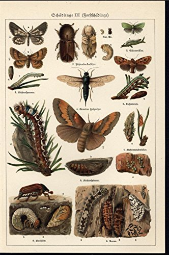 Flying Burrowing Insects Stinger Moths 1929 antique color lithograph print