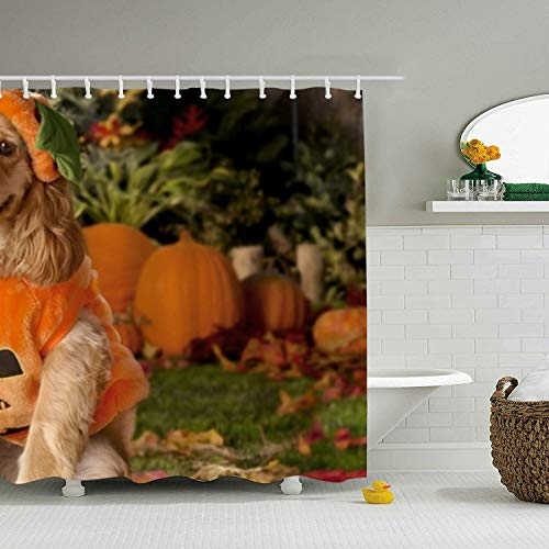 ROOMY Bathroom Shower Curtain Dog Dressed As A Pumpkin Shower Curtains with 12 Hooks, Durable Waterproof Fabric Window Curtain(72 x 72) ()