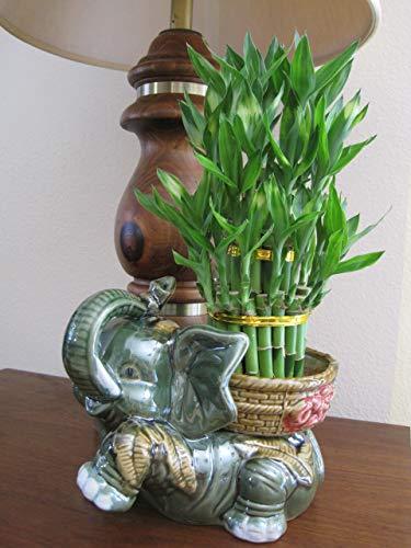 Jumbo Size Elephant Ceramic Vase with 3 Tier 4