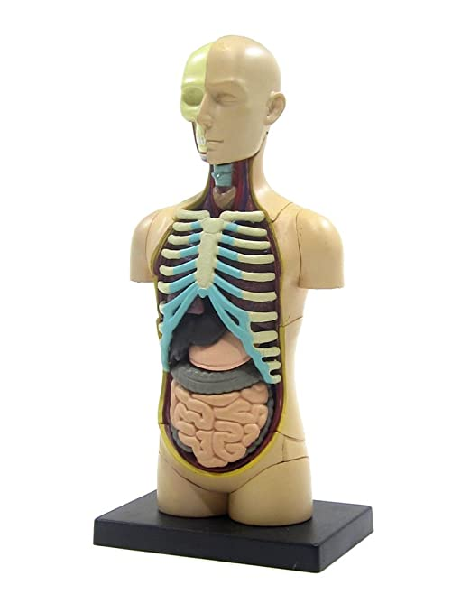 Amazon Skynet 4d Vision Body Human Anatomy Model Puzzle No01