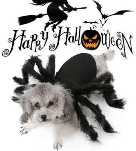 Ropa de araña para Mascotas de Halloween, Disfraz de araña de ...