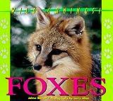 Foxes, Jalma Barrett, 1567112633