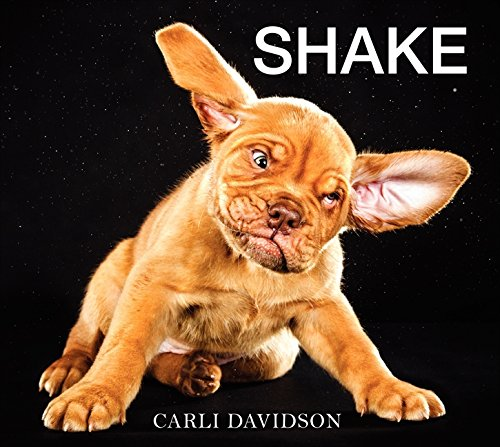 Shake - Dogs Uk Pets Preloved
