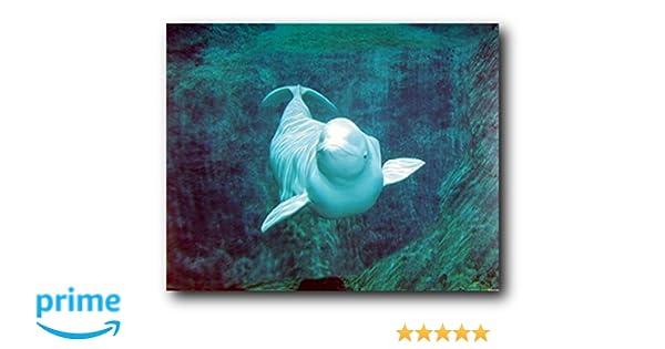 BELUGA WHALE SEA WORLD PHOTO ART CANVAS ORIGINAL