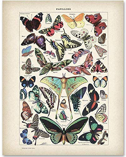 Nature Art Print Poster - Butterflies Illustration - 11x14 Unframed Art Print - Makes a Great Gift Under $15 for Bathroom Decor