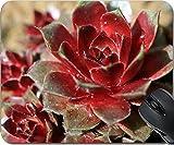MSD Natural Rubber Mousepad Mouse Pads/Mat design 35761537 Sempervivum plant