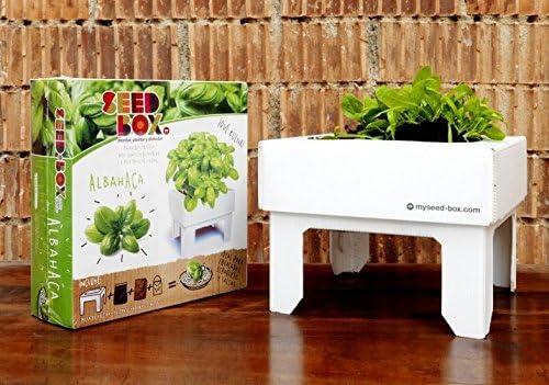SeedBox SBCUAL - Huerto Urbano de albahaca: Amazon.es: Jardín