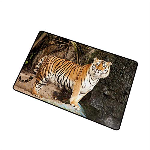 (Printed Door mat Tiger Portrait of an Alert and Angry Royal Bengal Feline Staring at Camera in Cave Print W16 xL20 Machine wash/Non-Slip)