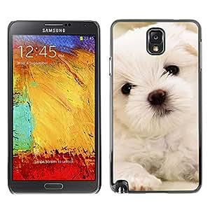 Maltese Dog Puppy White Soft - Metal de aluminio y de plástico duro Caja del teléfono - Negro - SAMSUNG Galaxy Note 3 III / N9000 / N9005
