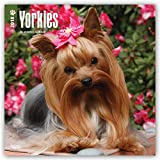 Yorkshire Terriers 2018 12 x 12 Inch Monthly Square Wall Calendar with Foil Stamped Cover, Animals Small Dog Breeds Terrier Puppies (Multilingual Edition)