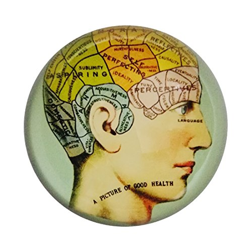 MICG Crystal Hemisphere Brain Phrenology Paperweight Galss Home Office Table -