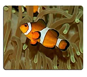 Mouse Pad Natural Rubber Mousepad IMAGE ID: 3404433 Underwater view of an Ocellaris clownfish Amphiprion ocellaris and sea anemone