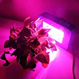 Cheap HHE Blue LED Grow Light for Indoor Plant Growing,one Switch for Leaf,another for Flowering … (50x5w)