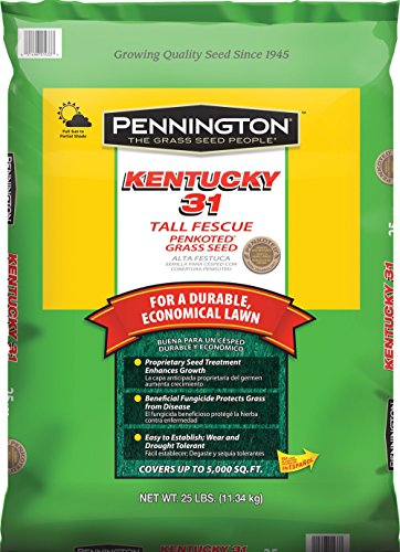 Pennington Kentucky 31 Tall