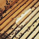 Essenc Small Hive Oil Traps Clear Plastic