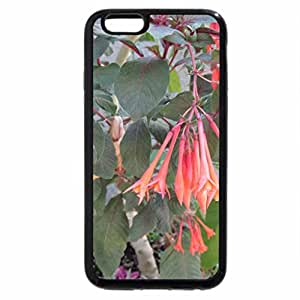 iPhone 6S / iPhone 6 Case (Black) A Good day at Edmonton Garden AB 04
